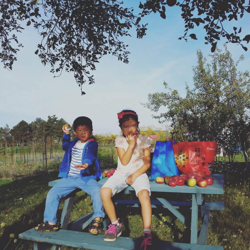 Young gardeners at the Welland Harvest Garden located at Niagara College