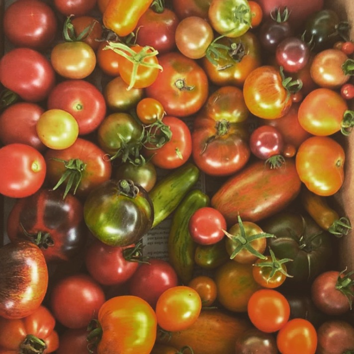 Heirloom Tomatoes from Tree & Twig Farm