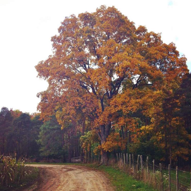 Fonthill in Fall