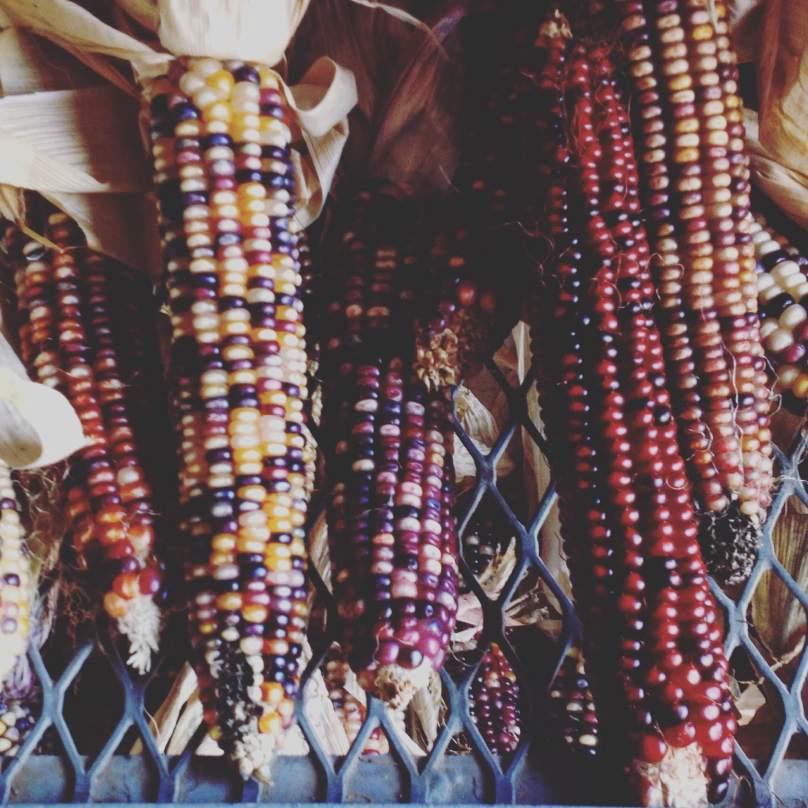 Rainbow Corn