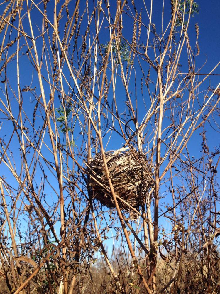 Birds nest found at E.C. brown wetland conservation area